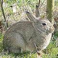 konijnen, hazen weren