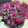 Compost in bloembakken