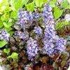 Vaste planten die in april de tuin al opvrolijken met hun mooie bloemen