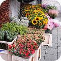 Snijbloemen tips voor een langere houdbaarheid
