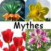 Bloembol mythes: 5 mythes over 5 bloembollen