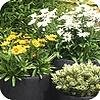 Goede plantcombinaties zorgen voor sfeer op balkon of terras
