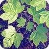 Bomen die uitzaaien in de tuin als onkruid