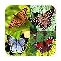 Vlinders: soorten in de tuin
