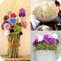 Snijhortensia bloemstukjes + info hortensia