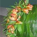 Bladapplicatie maken met bladeren van laurierkers (Prunus laurocerasus 'Otto Luycken')