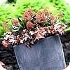 Sfeervolle winterbakbeplanting siert terras en balkon