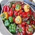 Pepers en piments in verschillende kleuren, vormen en smaken