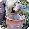 Bloempotten en de beplanting in de winter beschermen tegen de vorst en oostenwind