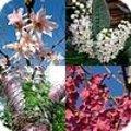 Prunussen in allerlei formaten