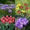 Voorjaarsbloeiende bloembollen van A tot Z: Anemone, blauwe druifjes, Chionodoxa,...