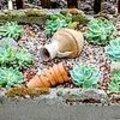 Voedertrog beplanten met vetplanten.
