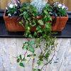 Bloembakken opvullen met winterharde planten.