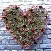 Valentijn: bloemstukjes gemaakt door leden van het bloemschikforum