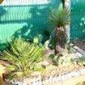 Onderhoudstips exotische planten in het voorjaar