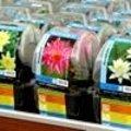 Waterplanten planten: verschillende soorten waterplanten en hun plantwijze