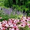Bloeiende planten in de tuin begin augustus