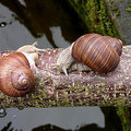 Slakken, geduchte vijanden