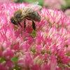 2010 Internationaal jaar van de Biodiversiteit: Bijen helpen.