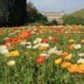 Een tuinreis naar Parijs in de lente deel 2