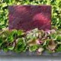 Kubus met cobrablad en Hydrangea