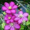 Bloemen zaaikalender bloemen