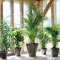 Palm als kamerplant - woonplant van de maand juli