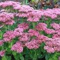 Meest voorkomende planten die bloeien in de maand augustus
