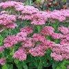 Meest voorkomende planten die bloeien in de maand oktober