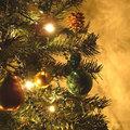 Keuze van een kerstboom<br>Den of spar?