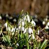 Tuintip -  Lente in de winter...