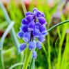 Planten die bloeien in maart