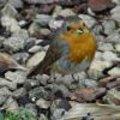 Foto van een roodborstje en andere natuurfoto's