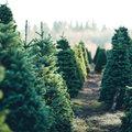 Laat je kerstboom ook verder leven na de feestdagen.