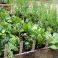 Gemakkelijke groenten