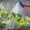 Hoeveel water heeft je tuin nodig?