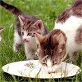 Gezonde voeding voor je kat