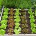 m² tuin: zomer