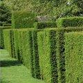 De beste bladhoudende hagen