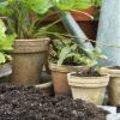 Starten met een moestuin in pot