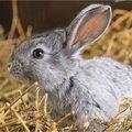 Soorten voeding voor konijnen