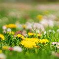 Laat in mei je gras maar groeien