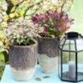 Tuinplant in de kijker: Leucothoe of druifheide