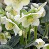 De aankoop van vaste planten in de winter