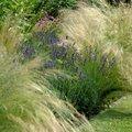 4 tips voor een onderhoudsarme tuin