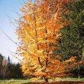 Meest geschikte bomen voor kleine tot middelgrote tuinen