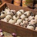 Kweek je eigen aardappelen