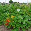 Plantcombinaties en combinatieteelt