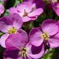 10 bloeiende vaste planten in april voor bijen