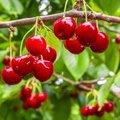 Fruitbomen en insecten - Nu beschermen, straks genieten